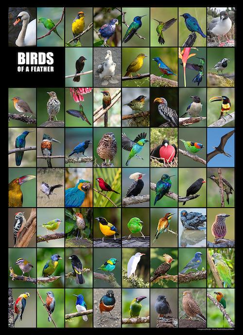 Birds 050221 small